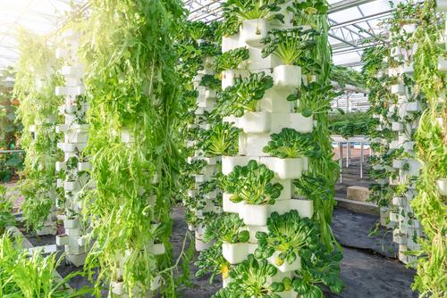 hydroponics organic