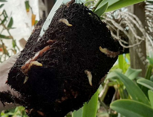 Getting Rid of Root Rot