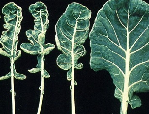 Molybdenum in Plants and Soils