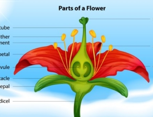 Flower Parts and Functions